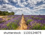 valensole provence france   02... | Shutterstock . vector #1133124875