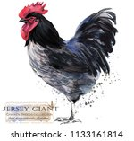 jersey giant rooster. poultry...   Shutterstock . vector #1133161814