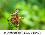 tiny bird on beautiful flower...   Shutterstock . vector #1133315477