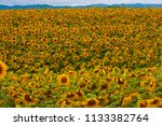 himawari farm of hokkaido... | Shutterstock . vector #1133382764