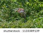 red heron in the woods watching ... | Shutterstock . vector #1133389139