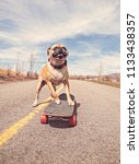 cute pug riding a skateboard on ... | Shutterstock . vector #1133438357