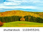 autumn forest trees panoramic... | Shutterstock . vector #1133455241