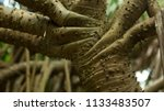 a peculiar prickly tree in the... | Shutterstock . vector #1133483507