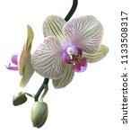 realistic green orchids and... | Shutterstock .eps vector #1133508317