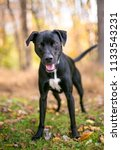 a black and white mixed breed... | Shutterstock . vector #1133543231