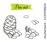 hand drawn sketch style pine... | Shutterstock .eps vector #1133558624