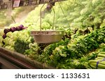 a photo of the lettuce aisle at ...   Shutterstock . vector #1133631