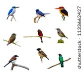 Collection Beautiful Birds Different Colorful - Fine Art prints