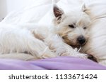 pet friendly accommodation ... | Shutterstock . vector #1133671424