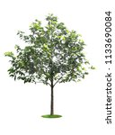 tree die cut at isolated on... | Shutterstock . vector #1133690084