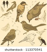 set of handdrawn birds | Shutterstock .eps vector #113370541