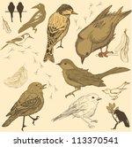 set of handdrawn birds | Shutterstock .eps vector #113370541