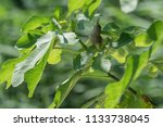 sparrow on tree at park | Shutterstock . vector #1133738045