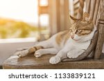 young cat sleep on a chair in... | Shutterstock . vector #1133839121