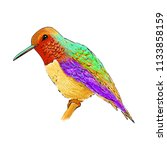 hummingbird with colorful... | Shutterstock . vector #1133858159