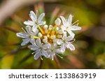 a beautiful marsh labradors...   Shutterstock . vector #1133863919