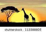 illustration of giraffe in a... | Shutterstock . vector #113388805