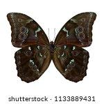 sunset or blue morpho butterfly ...   Shutterstock . vector #1133889431