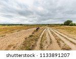 Landscape Rozendaalse Veld In...