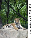 tiger in its natural habitat | Shutterstock . vector #113391451