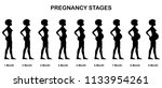 Pregnancy stages sihouettes. All the objects and body stages are in different layers and the text types do not need any font.