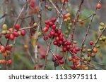 san miguel tzinacapan  puebla...   Shutterstock . vector #1133975111