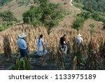san miguel tzinacapan  puebla...   Shutterstock . vector #1133975189