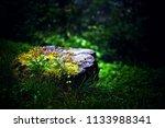 a fantastic fantastic...   Shutterstock . vector #1133988341