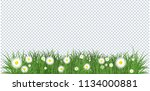 camomiles and a green grass... | Shutterstock . vector #1134000881