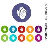 human heart organ icons color... | Shutterstock .eps vector #1134069071