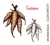 cassava tuber vector sketch.... | Shutterstock .eps vector #1134139157
