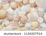 Seashells as background, sea shells collection