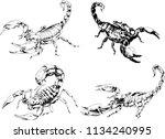 vector drawings sketches... | Shutterstock .eps vector #1134240995