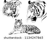 set of vector drawings on the... | Shutterstock .eps vector #1134247865