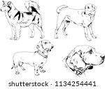 vector drawings sketches... | Shutterstock .eps vector #1134254441