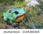 exotic toad. animal. garden  | Shutterstock . vector #1134360365