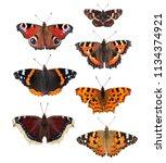 European Butterflies  ...