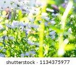 aspen fleabane  erigeron...   Shutterstock . vector #1134375977