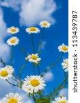 wild flowers under bright blue... | Shutterstock . vector #113439787