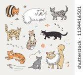 different doodle vector cats... | Shutterstock .eps vector #1134416501