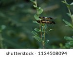 Black Yellow Dragonfly On Gree...