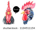 watercolor hand drawn rooster... | Shutterstock . vector #1134511154