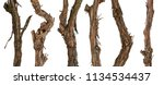 collection dry branches of the... | Shutterstock . vector #1134534437