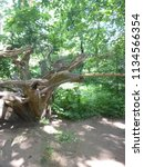 lemur in dutch zoo | Shutterstock . vector #1134566354