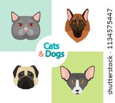 different cats and dogs breeds... | Shutterstock .eps vector #1134575447