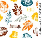 hello autumn. leaf fall.... | Shutterstock .eps vector #1134635624