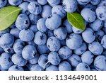 juicy and fresh blueberries... | Shutterstock . vector #1134649001