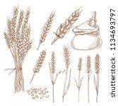 wheat cereal spikelets  grain... | Shutterstock .eps vector #1134693797