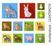 toy animals flat icons in set...   Shutterstock .eps vector #1134709274